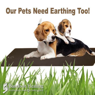 Our Pets Need Earthing Too!